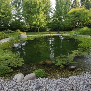 come eliminare le alghe nel laghetto petingros blog