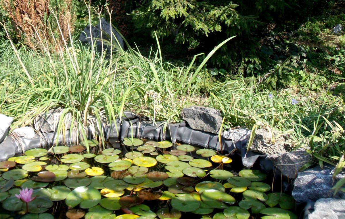 Come eliminare le alghe nel laghetto petingros blog for Animali laghetto