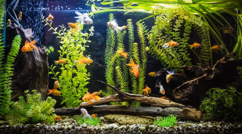 Come costruire un acquario petingros blog for Acquario laghetto