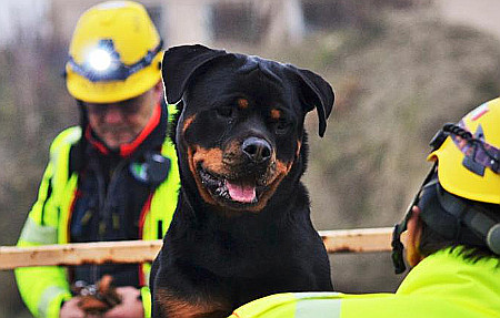 Cani eroi al lavoro