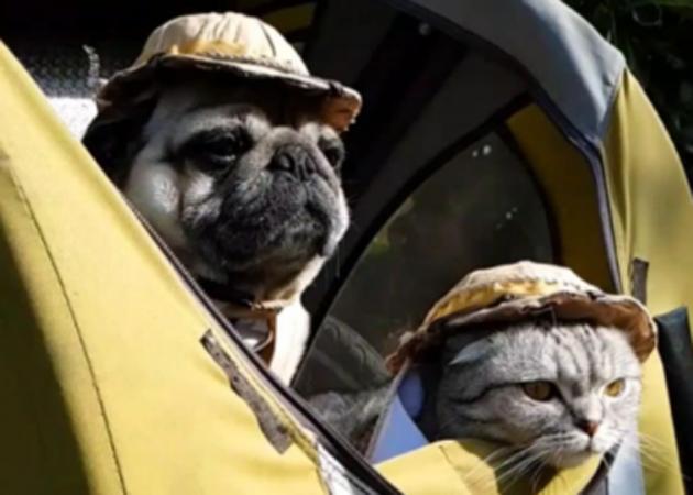 Cane e gatto insieme al cammino di santiago petingros blog for Quali sono i rettili
