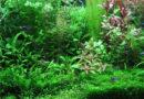 Le piante per acquario d'acqua dolce