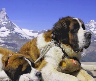 Chi è Più Intelligente Tra Cane E Gatto Petingros Blog