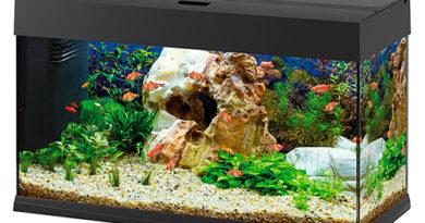 Quali sono i test da fare per un acquario d'acqua dolce?