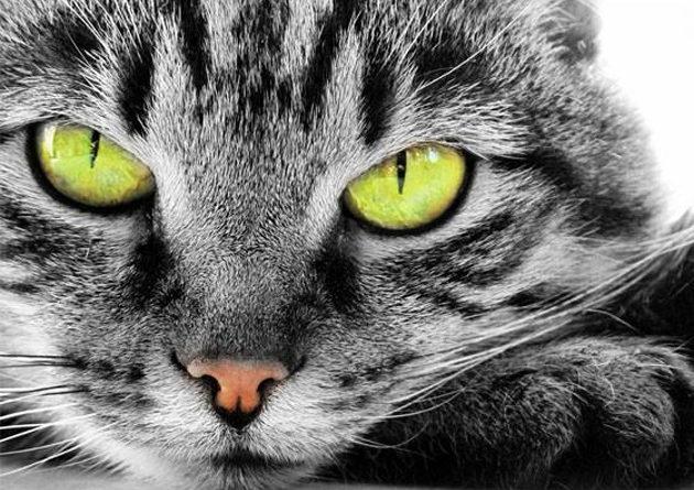 I gatti più belli del mondo a Padova