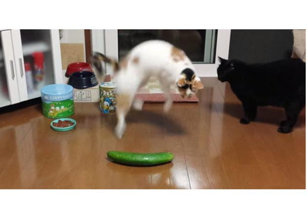 Gatti e cetrioli