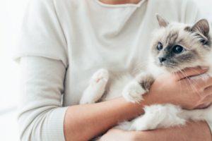 Gatto e uomo
