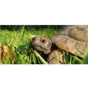 tartarughe di terra come allevarle