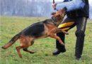 Cani da guardia | Quali sono i migliori
