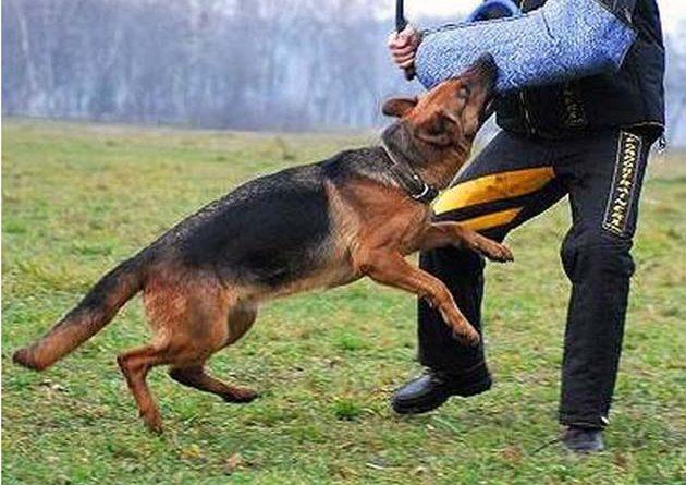 cani difesa