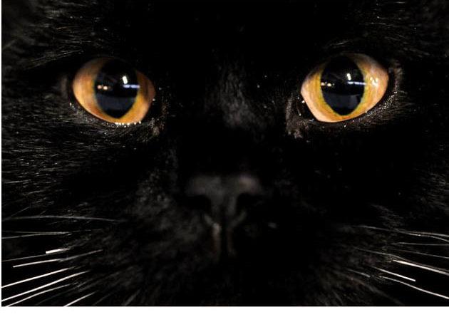 Sognare gatti | vediamone il significato