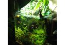 Acquario senza filtro | Consigli utili