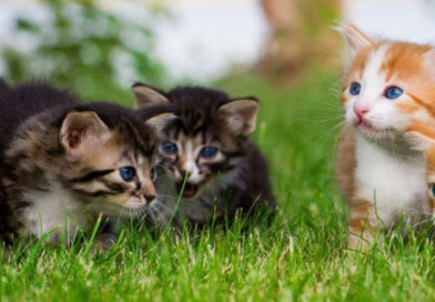 Gestazione nei gatti|Quanto dura e consigli utili
