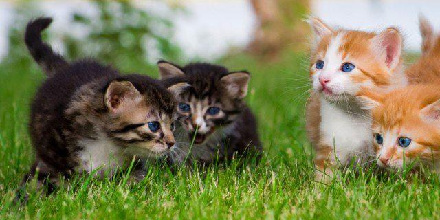 piccoli gatini