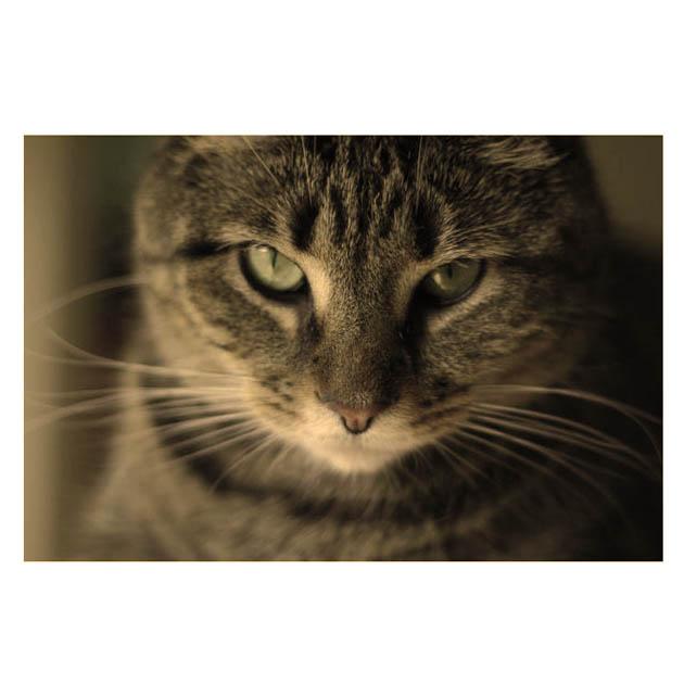 Significato gatti
