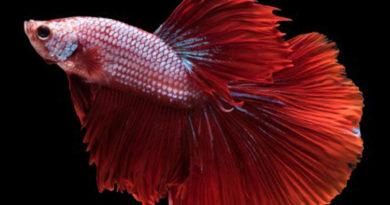 Pesci tropicali e non | Quali sono i migliori in acquario