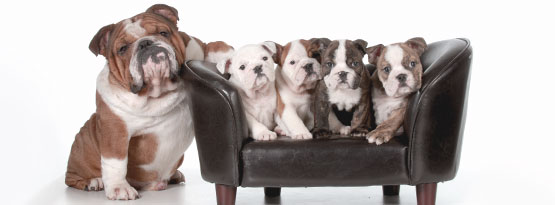 Gravidanza nei cani