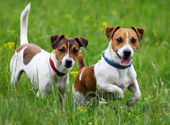 Quanto vive un cane petingros blog for Nomi per cagnolini di piccola taglia