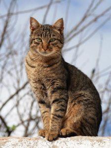 si sostiene che i gatti abbiano 7 vite