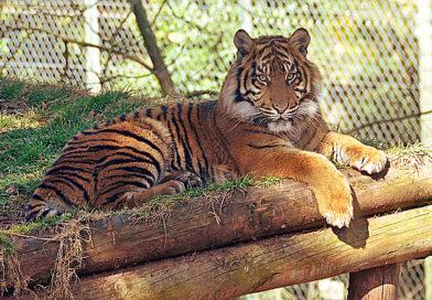Parco zoo di Lignano
