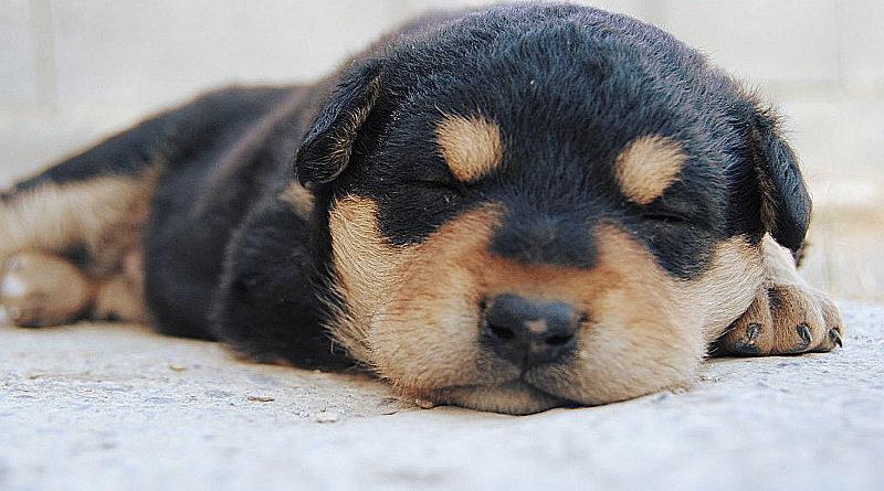 Un cuscino per il tuo cane