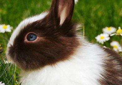 Adottiamo un coniglio