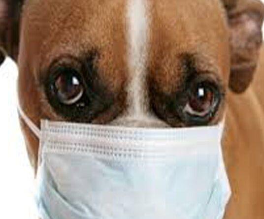 Sanificare la casa con animali